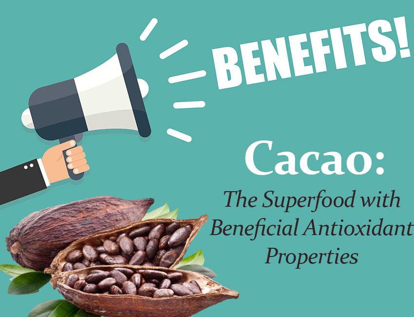 Organic raw cacao nibs Malaysia